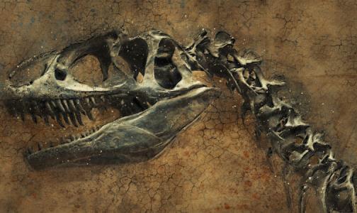 Фото №1 - Ученые впервые нашли злокачественную опухоль у динозавра, жившего 76 миллионов лет назад