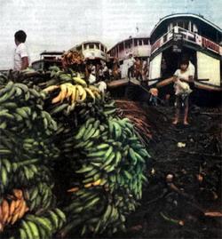 Фото №2 - Амазонские коробейники