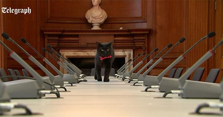 Фото №1 - В Великобритании к власти стремится кот Кромвель