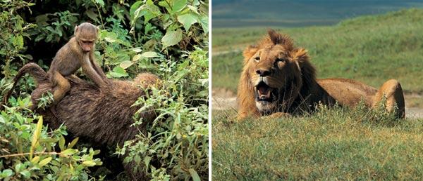 Фото №2 - Жемчужина Танзании