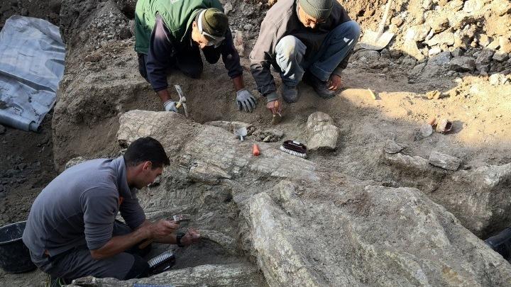 Фото №1 - В Греции обнаружены деревья возрастом 18 миллионов лет