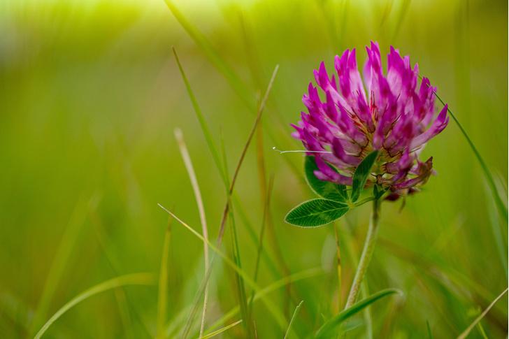Фото №1 - Ученые выяснили, какое растение предотвращает облысение