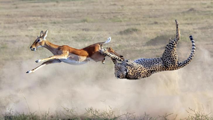 Фото №1 - Один кадр: Кения