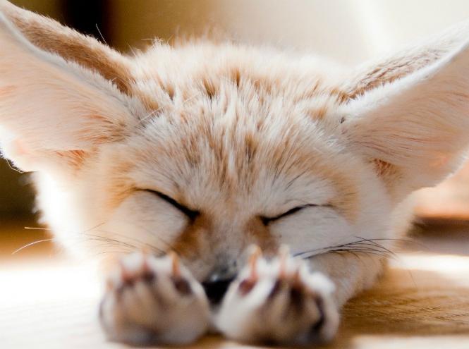 Фото №6 - Самые ми-ми-милые дикие животные