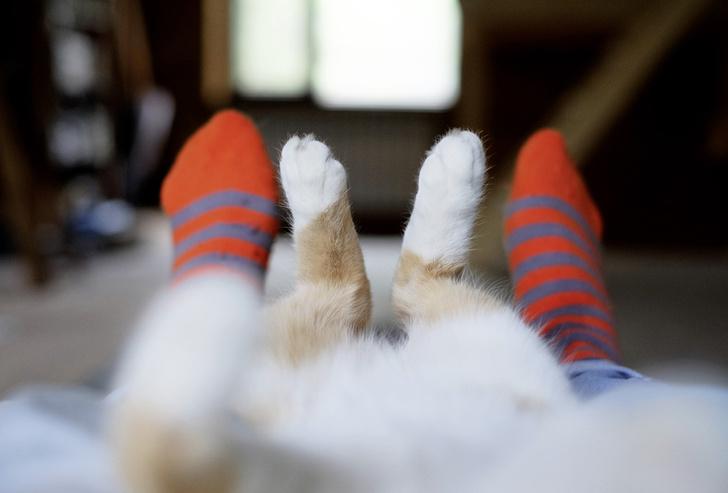 Фото №1 - Почему у одних животных лапы, а у других ноги?