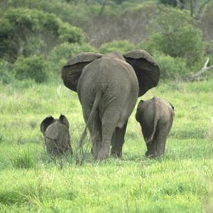 Фото №1 - Экологи нашли остров слонов в Судане