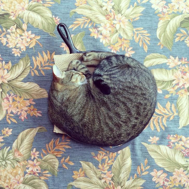 Фото №2 - 10 поз, в которых спит твой кот, и что они значат
