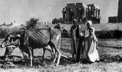 Фото №3 - Крестьяне и бедуины