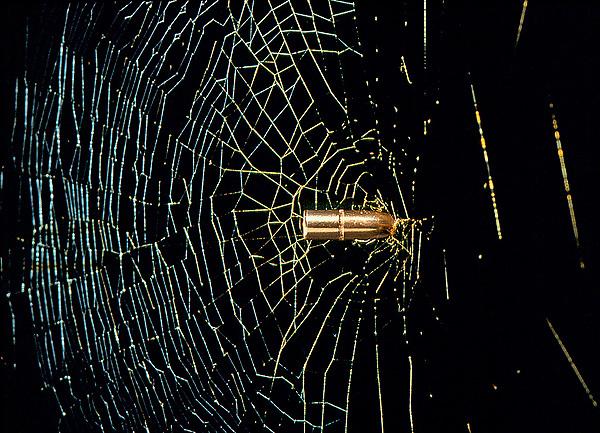 Фото №1 - Голограммы на шоколаде, пистолет для паутины и другие новые открытия
