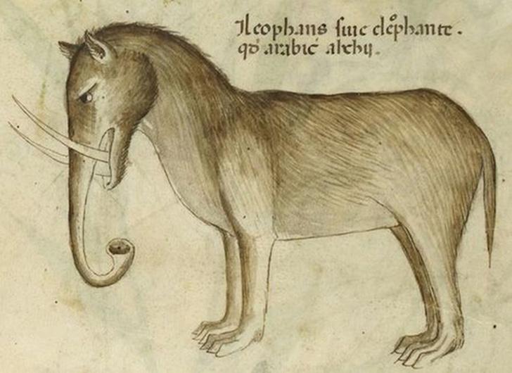 Фото №10 - Как в старину художники изображали животных, которых никогда не видели (25 странных существ)