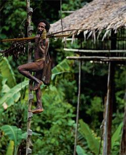 Фото №2 - Обитатели папуасских пентхаусов