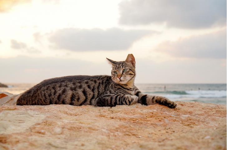 Фото №1 - Кошачий пляж стал одним из лучших мест на Сардинии