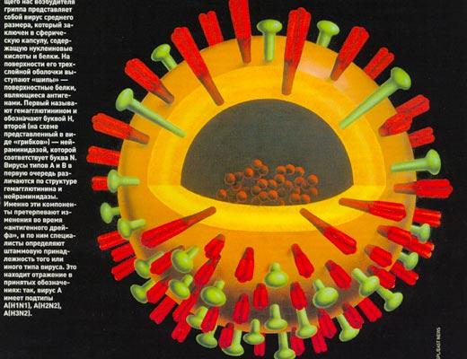 Фото №1 - Бессмертная инфлюэнца