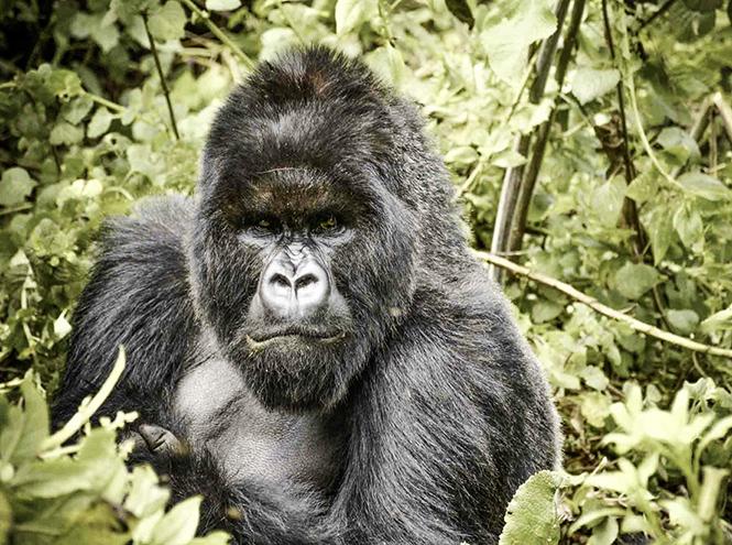 Фото №4 - Руанда: завтрак с гориллами, танцы и другие лекарства