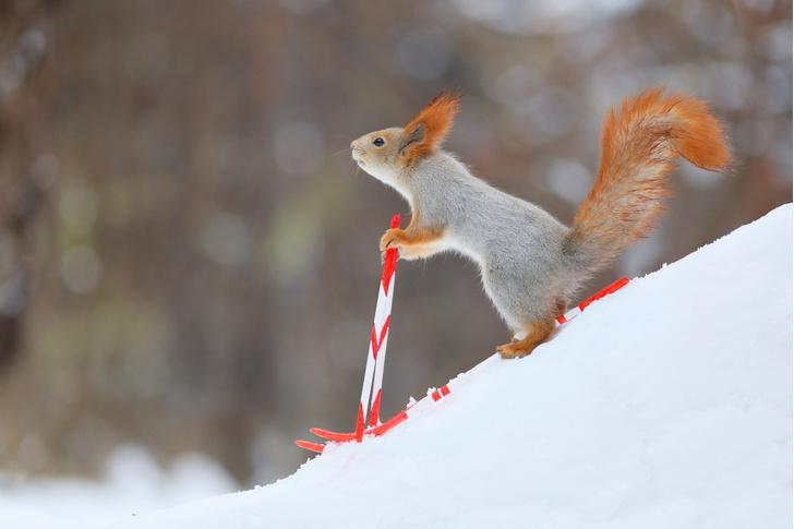 Фото №1 - На лыжи!