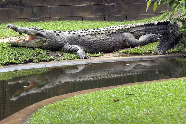 Фото №12 - Гиганты планеты: самые большие животные, которые сейчас живут на свете