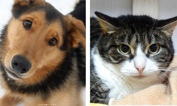 Фото №1 - Котопёс недели: кошка Текила и пёс Кефир