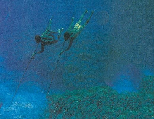 Фото №1 - Коралловый детектив