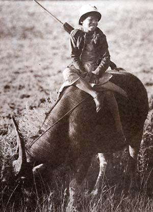 Фото №1 - Уважаемый буйвол