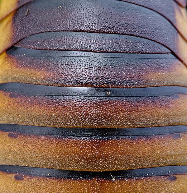 Фото №5 - Доктор зло: почему ни высокие технологии XXI века, ни опыт поколений не помогли истребить тараканов