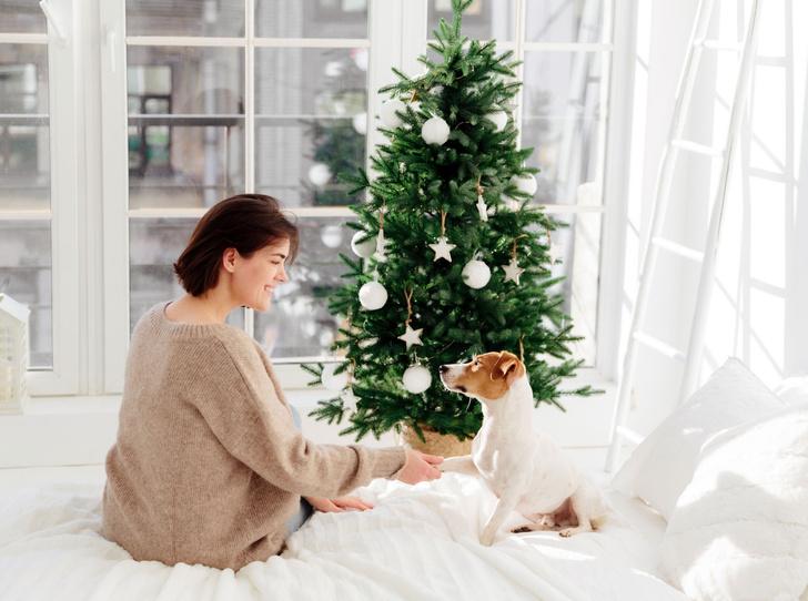 Фото №2 - Как выбрать елку на Новый год?