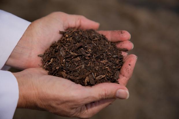 Фото №1 - Американская компания придумала, как делать из людей удобрения, и предлагает перерабатывать почивших родственников в компост