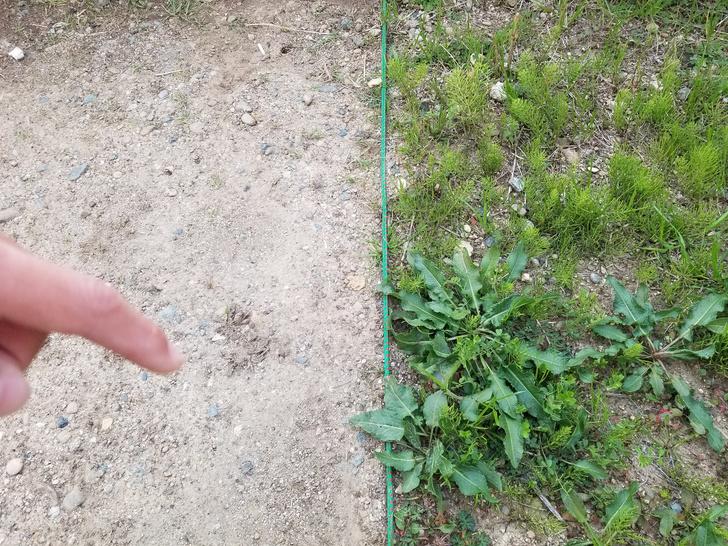 Фото №7 - Мальчик победил сорняки на заднем дворе, бегая по ним каждый день по полчаса