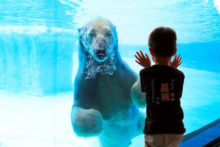 Фото №1 - Рожденный жить на воле: 3 самых прогрессивных зоопарка мира