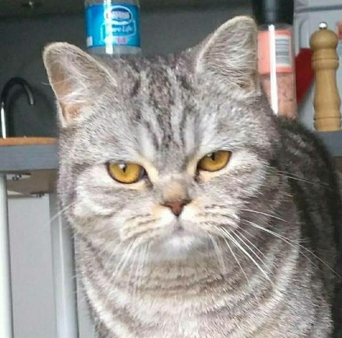 Фото №8 - 20 мемных котов, похожих на известных режиссеров