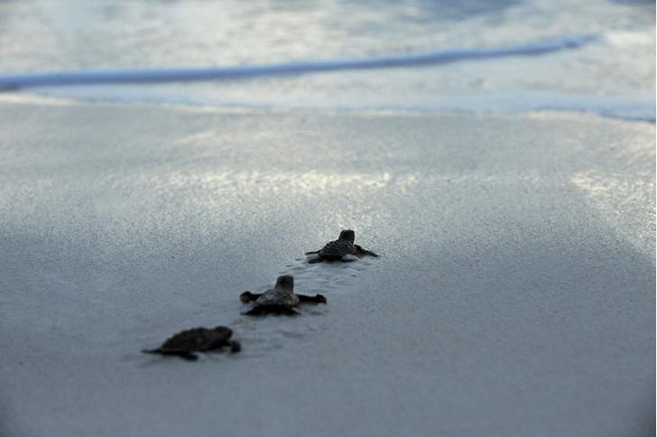 Фото №1 - За черепахами и птицами начнут следить из космоса