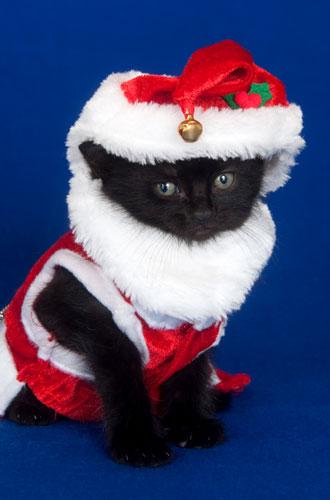 Фото №16 - Вырядился: забавные новогодние наряды домашних питомцев