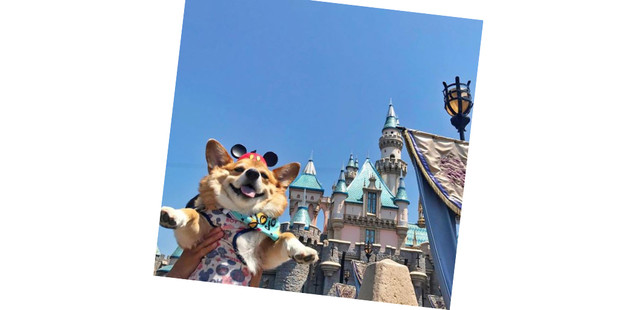 Фото №14 - 20 очаровательных собак в костюмчиках по мотивам мультфильмов Disney