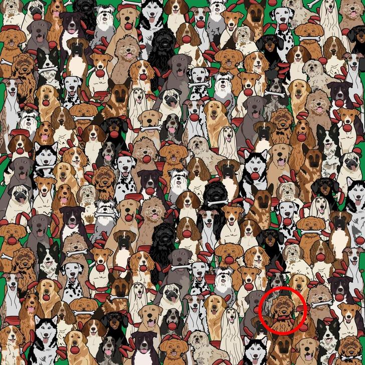 Фото №5 - Коварная, но милая (но коварная!) головоломка: отыщи пса, который стащил сосиску