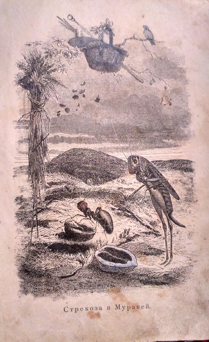 Фото №3 - Знаешь ли ты, что на самом деле стрекоза в басне Крылова— вовсе не стрекоза?