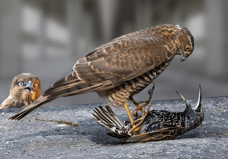 Фото №4 - Лучшие фотожабы про разборку ястреба и скворца