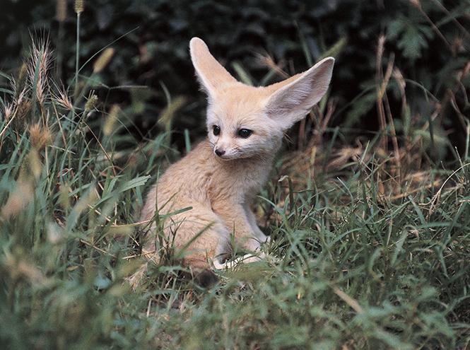 Фото №5 - Самые ми-ми-милые дикие животные