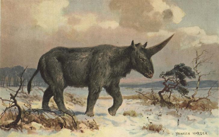Фото №1 - Найдены останки последнего «сибирского единорога»