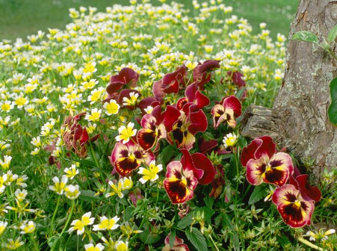 Фото №2 - Вечное лето: 5 долгоцветущих растений для сада