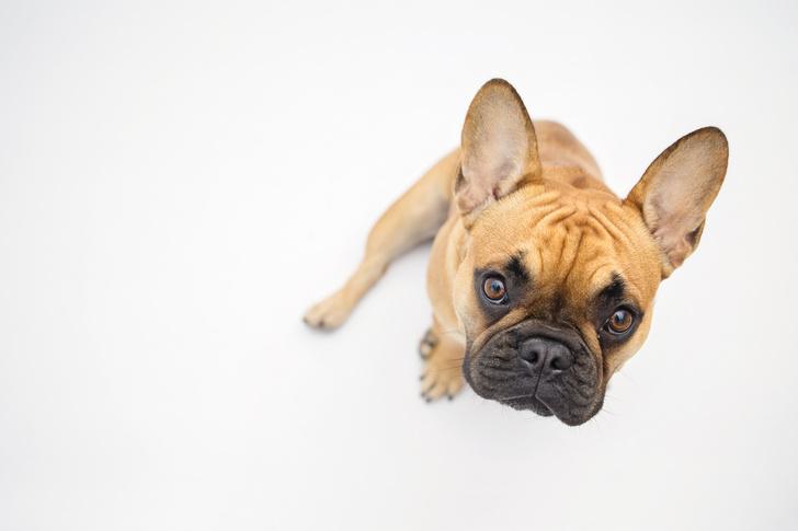 Фото №1 - Ученые усомнились в исключительности собак