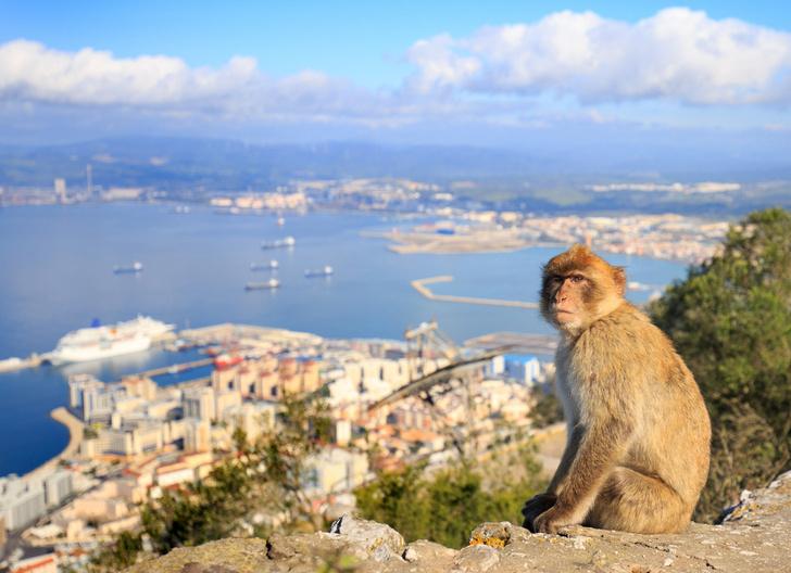 Фото №1 - Малага и Гибралтар: один день, две страны
