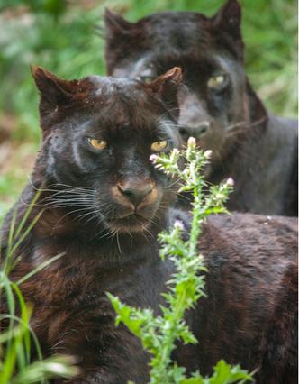 Фото №3 - Звериная страсть: на каких животных похожи звездные пары