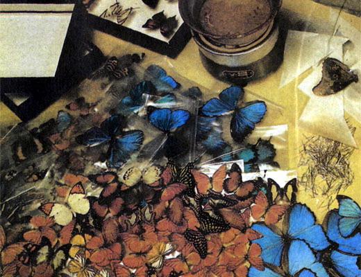 Фото №1 - Голубая морфо с бумажным туловищем