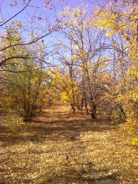 Фото №1 - 10 мест в Астрахани, где осенью – настоящая сказка!