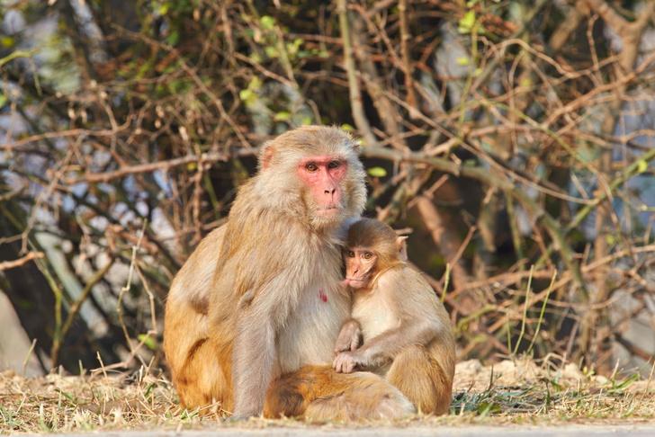 Фото №1 - Похожий на ВИЧ вирус удалось удалить из генома приматов