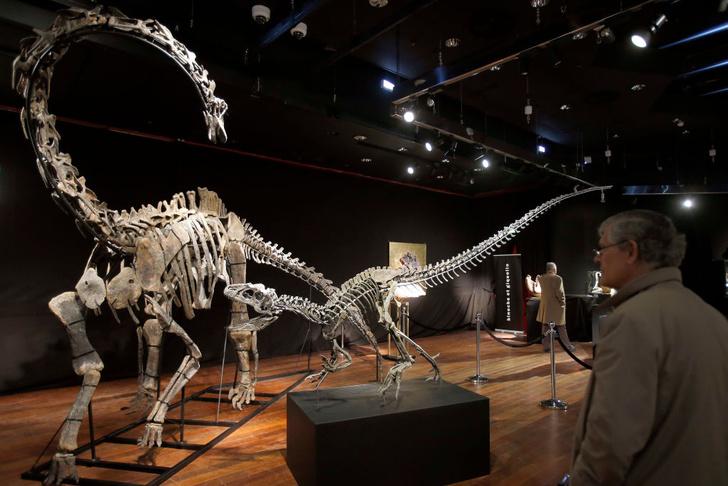 Фото №1 - В Париже продают двух динозавров