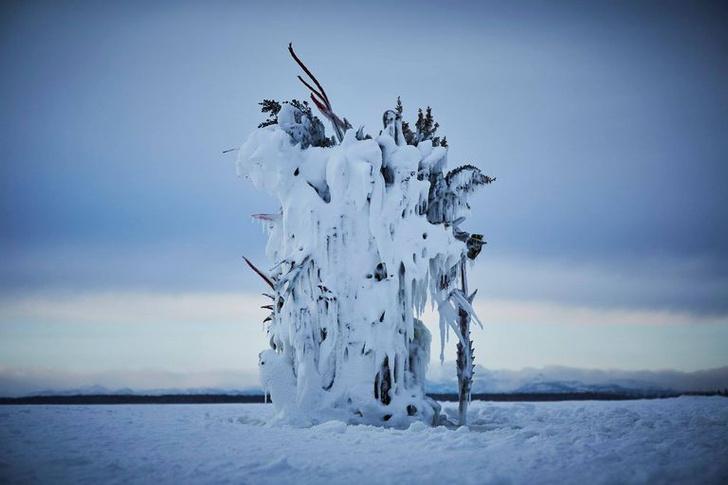 Фото №3 - Инсталляция из замороженных цветов на Хоккайдо
