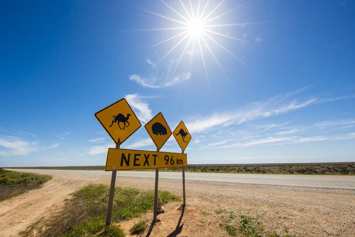 Фото №11 - Пересекая континенты: 8 самых длинных автодорог на планете