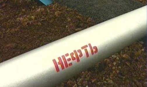 Фото №1 - Разливы нефти в Финском заливе сегодня убирали студенты петербургских вузов