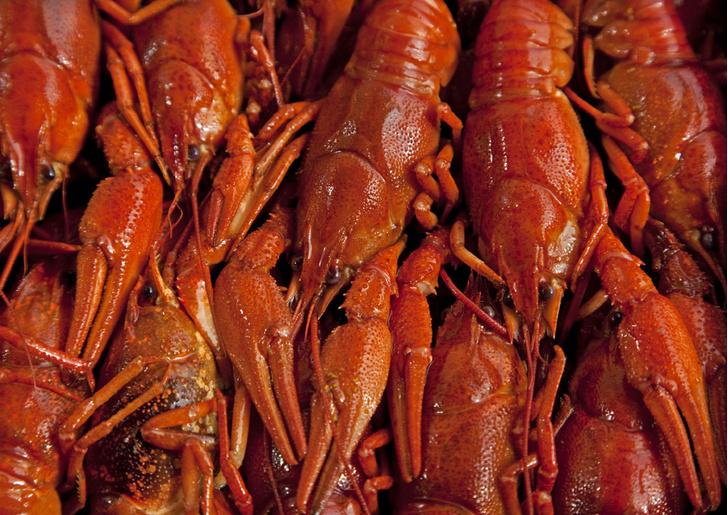 Фото №1 - Традиции: фестиваль раков в Швеции