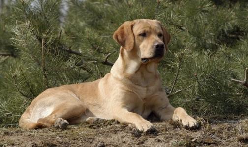 Фото №1 - Собаку наградили медалью за обнаружение рака у сотен людей